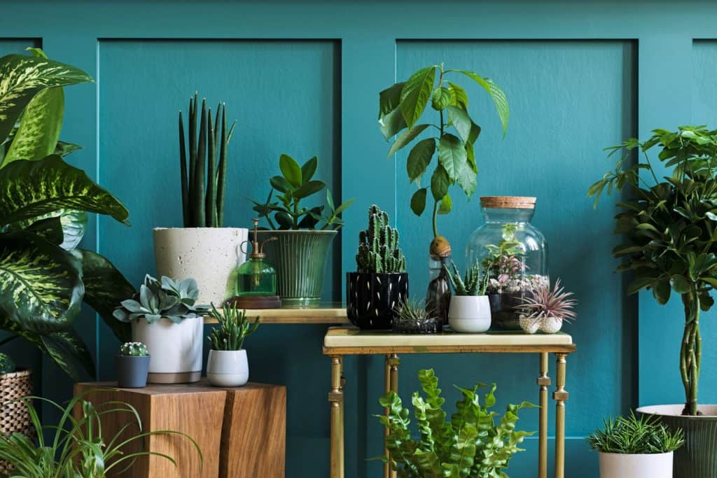 Different species of plants placed on top of tables inside a blue wall living room