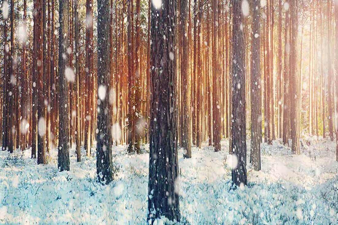 Three Deer in Winter Forest Bathroom Waterproof Fabric Shower Curtain /& 12 Hooks
