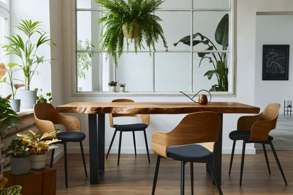 A modern  rustic themed dining room with a walnut table and white wall with hanging indoor plants all over the room