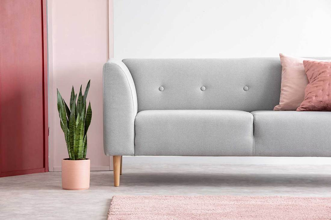 Green plant in pastel pink pot next to grey comfortable sofa with pillows in minimal scandinavian living room