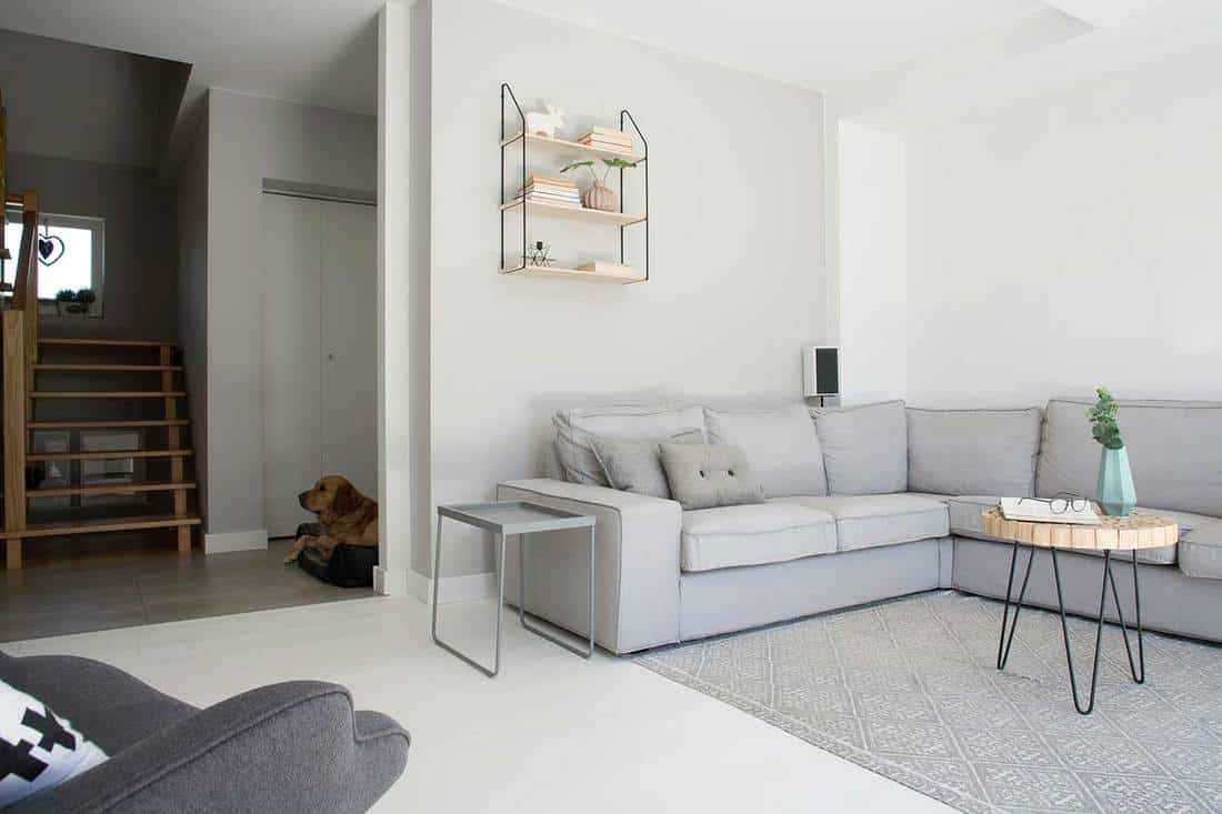 Grey corner couch with wooden table on carpet in monochromatic living room interior
