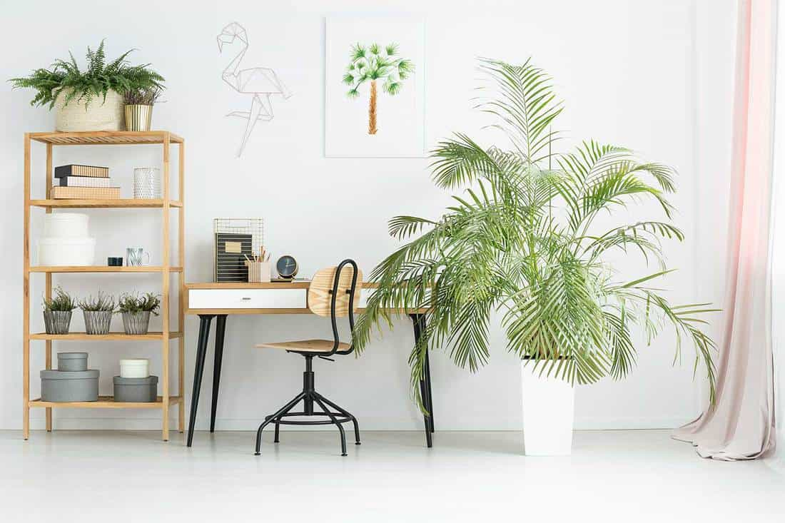 White workspace in flat interior with potted plants on wooden rack, desk, poster and decorations