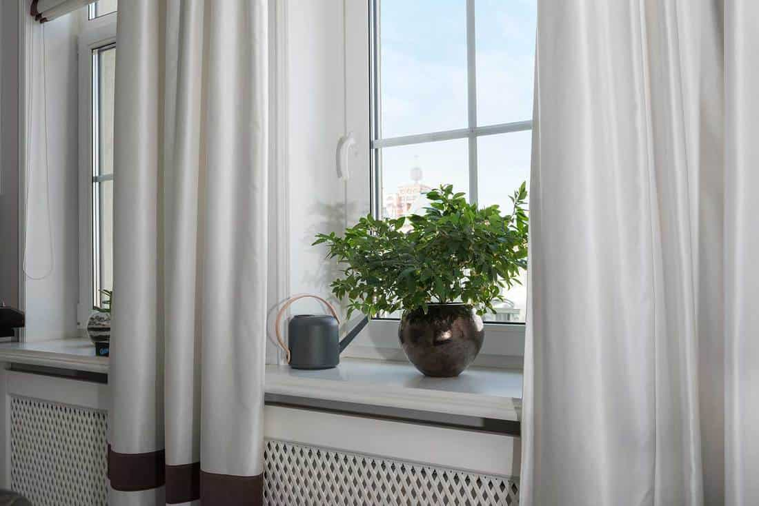 Window with white curtains, watering pot and house plant on brown vase