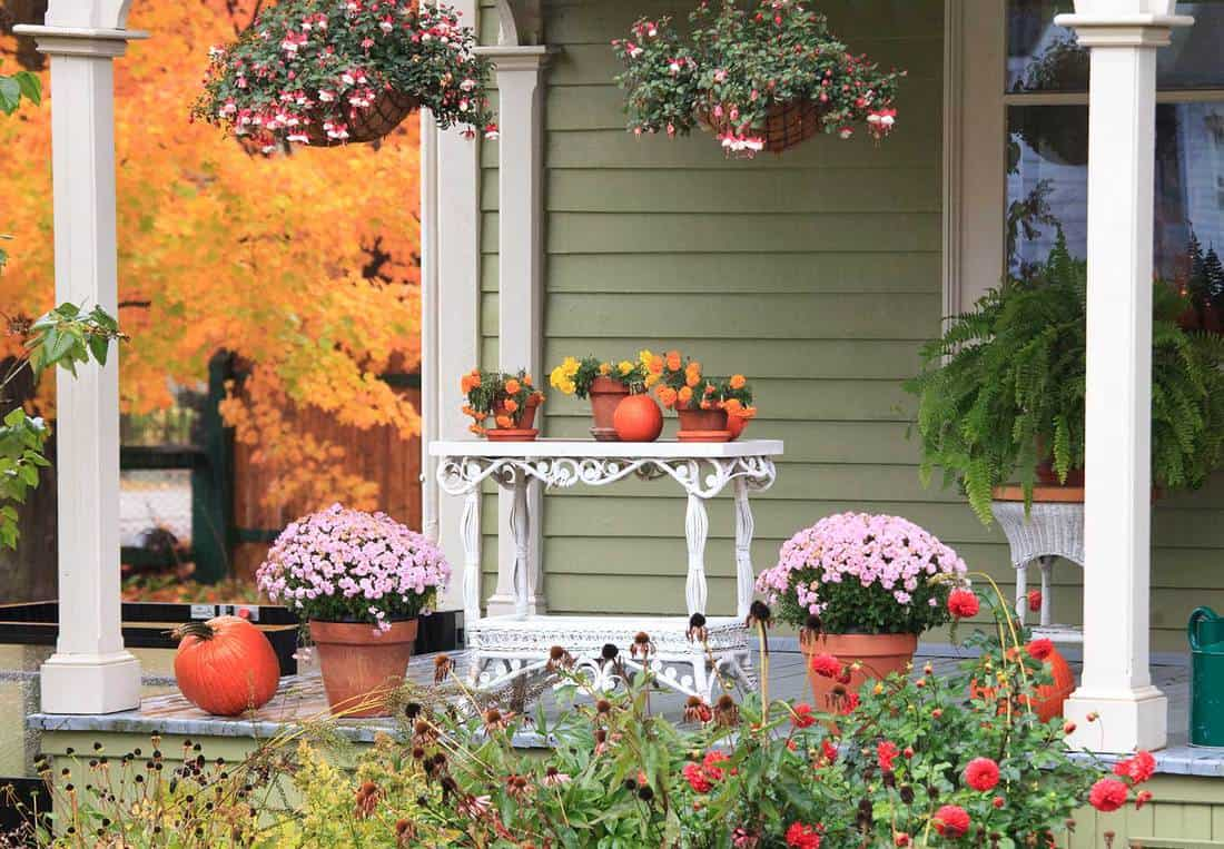 A porch beautifully decorated with flowers, pumpkins and plants