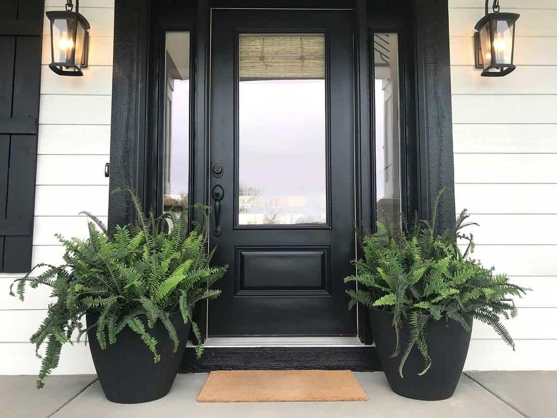 Black front door with plants