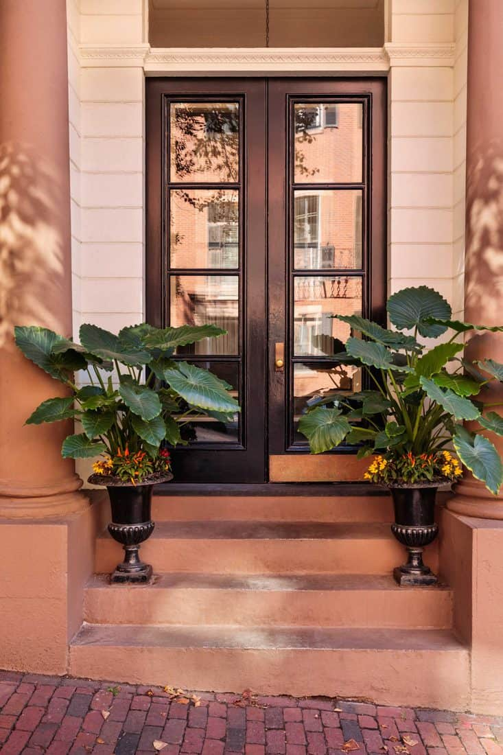 Dark wooden french door with windows and plants placed at stairs