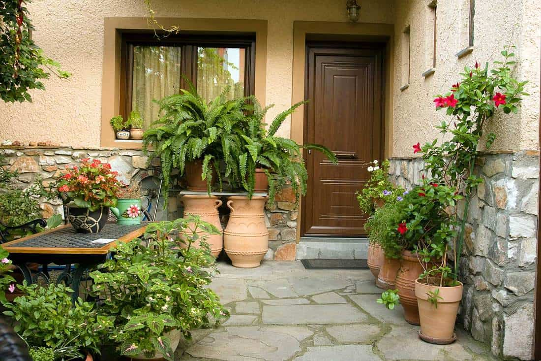 Lovely house entrance with potted decorative ferns and flowering plants