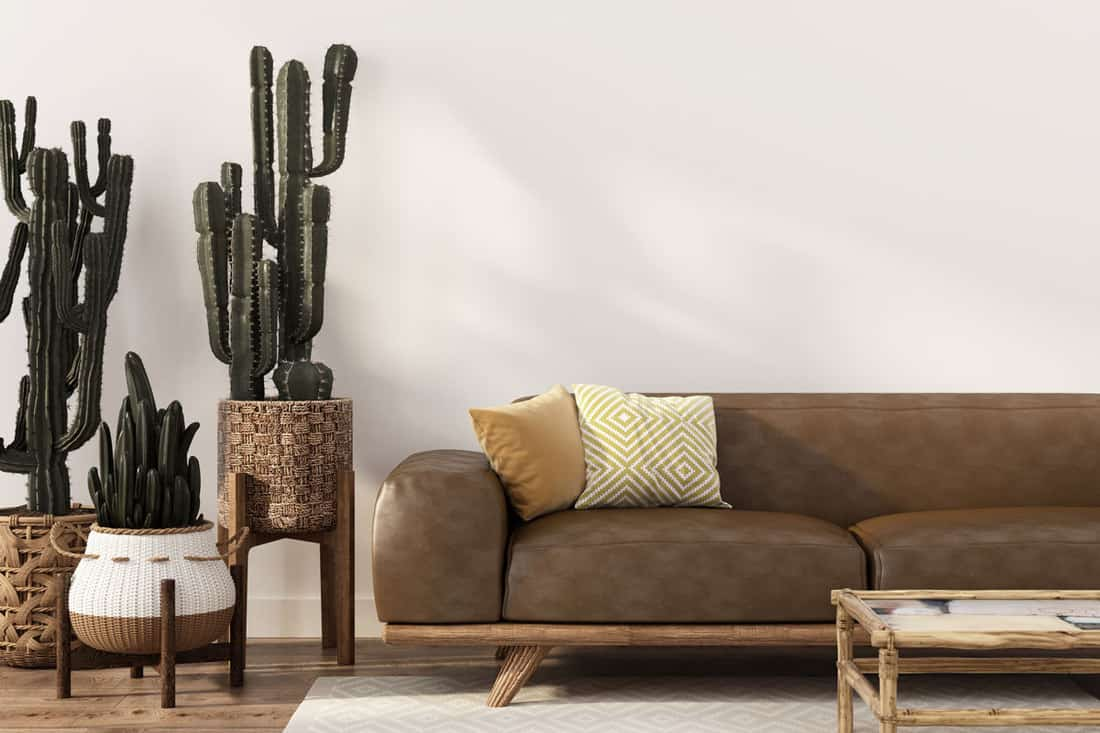 Brown sofa in white colored living room and cactus plants for decoration