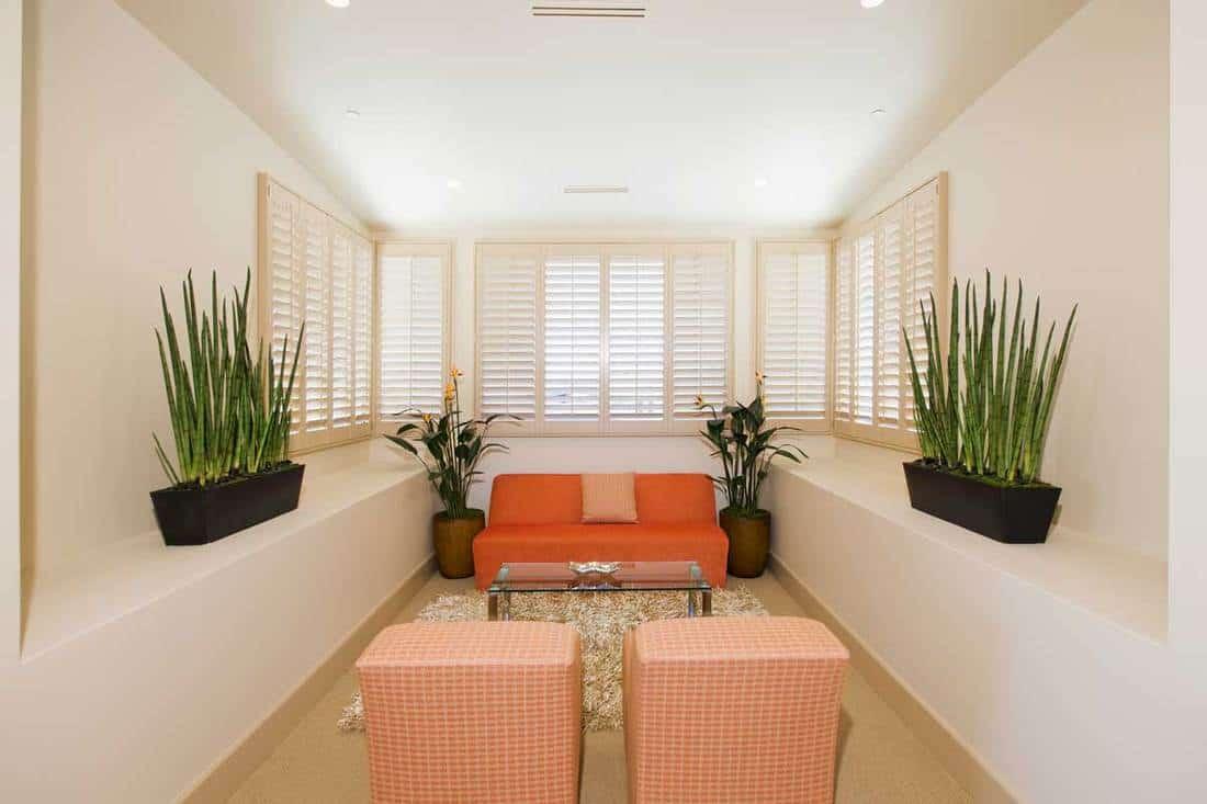 Narrow living room with houseplants