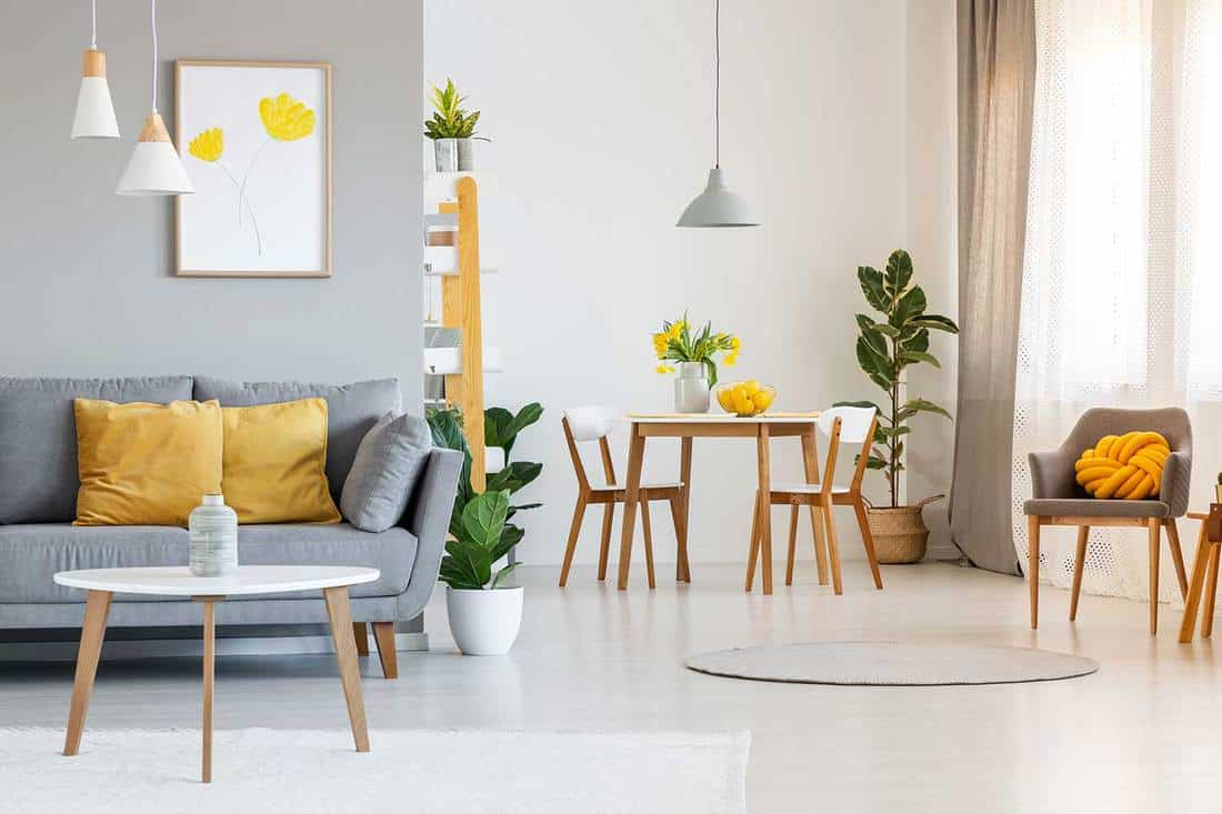 Open space living and dining room interior with gray sofa, wooden tables, white chairs and plants