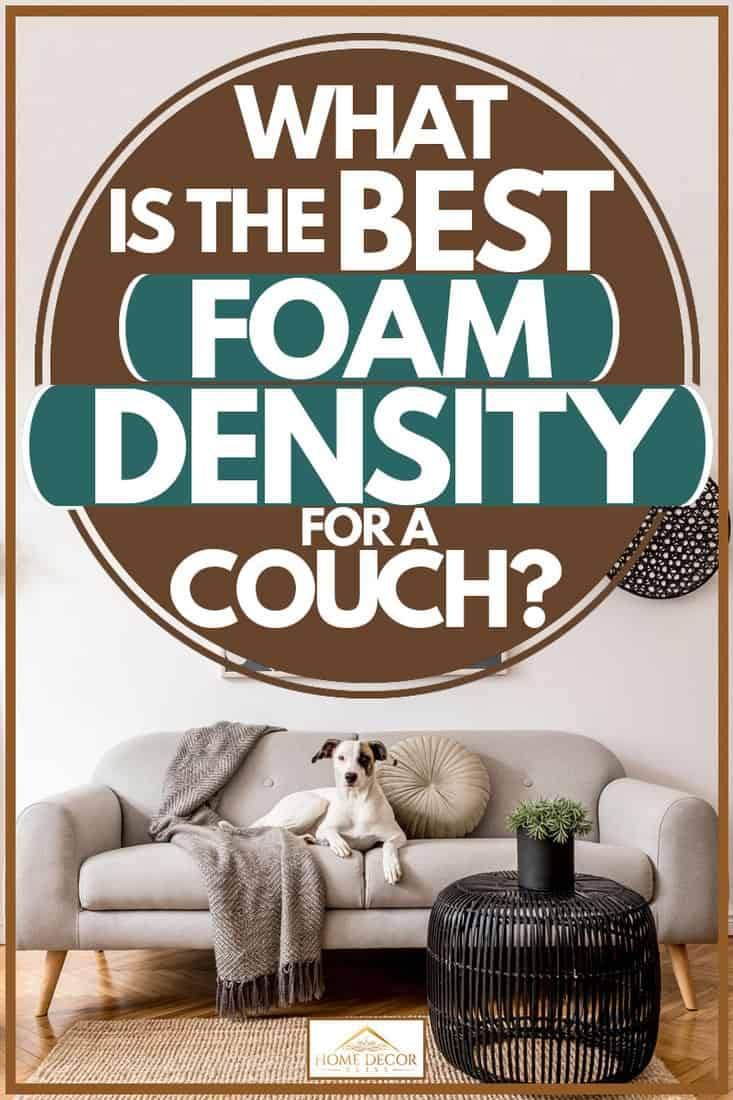 Living room with a dog sitting on sofa and white walled background with painting, What Is The Best Foam Density For A Couch?