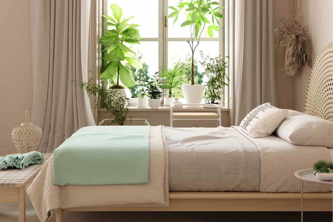 A bed with folded blankets and light brown colored curtains near windows with plants