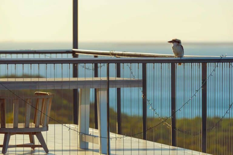 Bird on house porch at sunset with the ocean blurred in the background, How to Keep Birds Away From Your Porch [5 Actionable Ways]