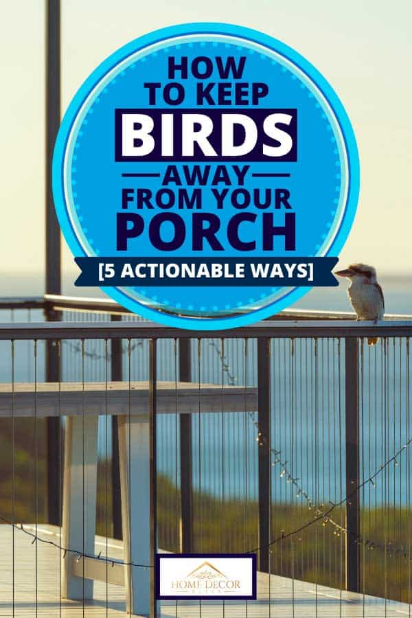 Bird on house porch at sunset, How to Keep Birds Away From Your Porch [5 Actionable Ways]