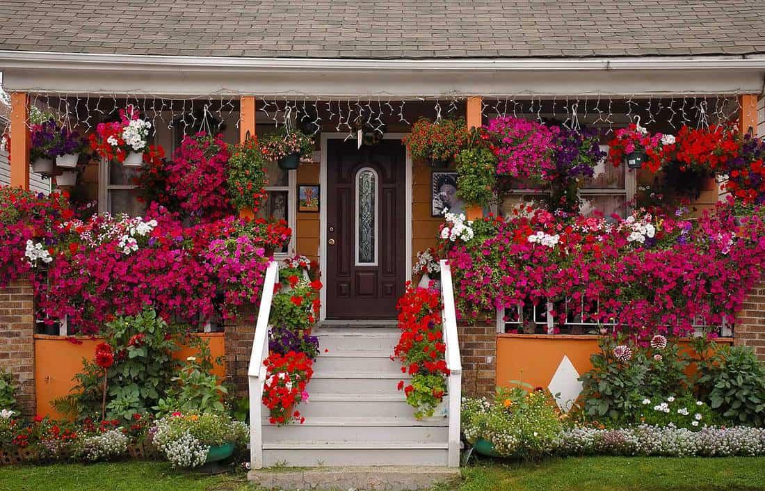 Front porch full of flowers and geraniums with stairway to entrance