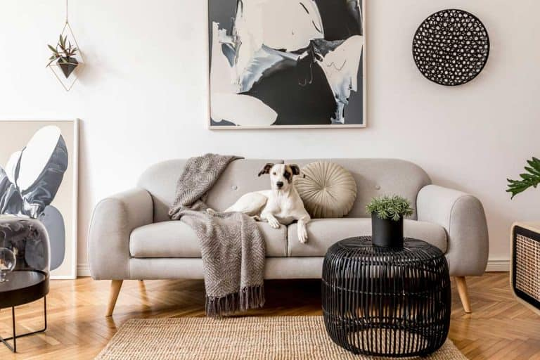 Stylish and scandinavian living room interior of modern apartment with grey sofa and white wall, What Color Couch Goes With White Walls? [Five suggestions inc. pictures]