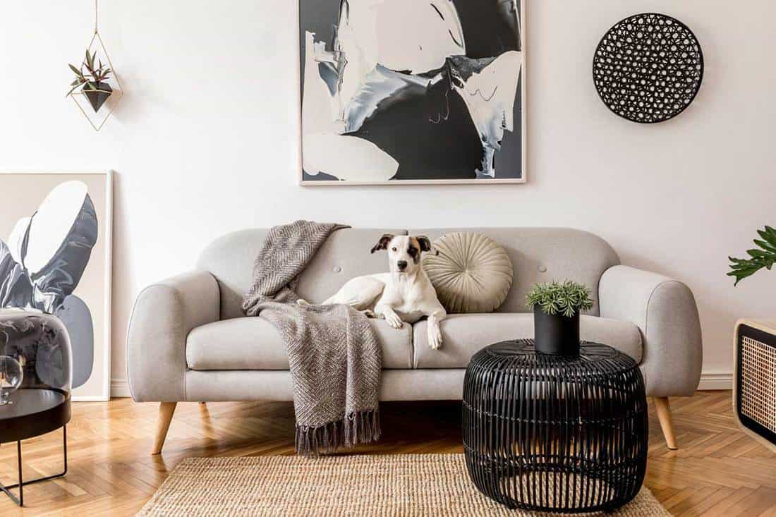 What Color Couch Goes With White Walls Five Suggestions Inc Pictures Home Decor Bliss
