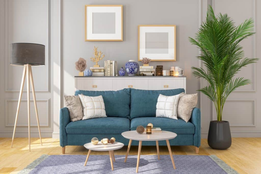 A blue couch placed next to a gray wall with an indoor palm tree on the right