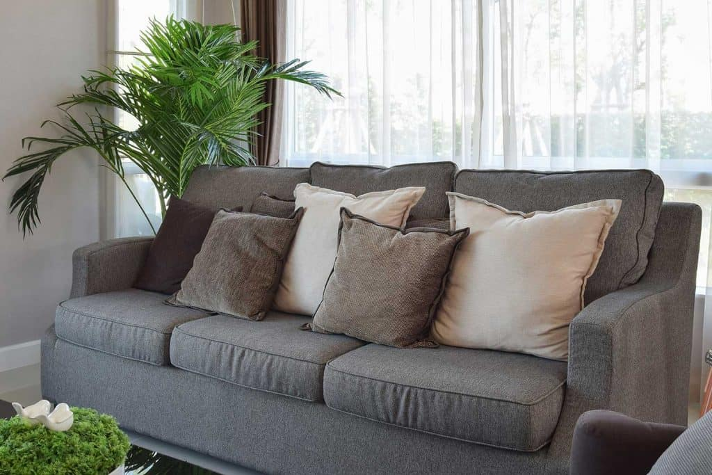 Modern living room design with cozy gray sofa, throw pillows and house plants