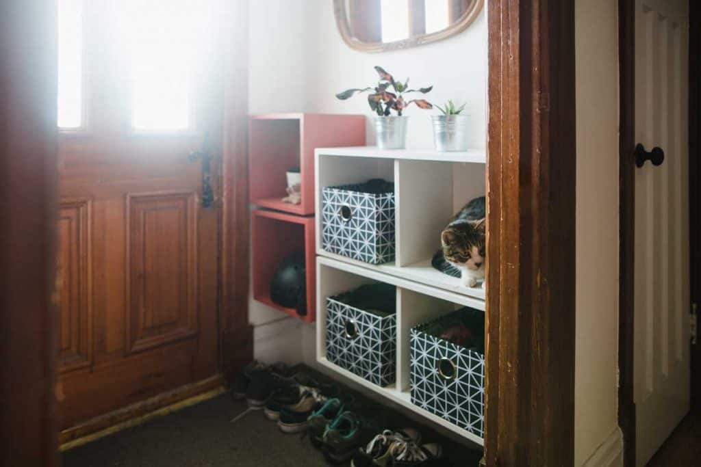 home interior, entrance hall, domestic cat, storage compartment, Where to Store Shoes at Entryway? [5 Suggestions]