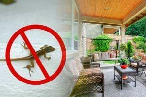How To Keep Lizards Away From The Porch?