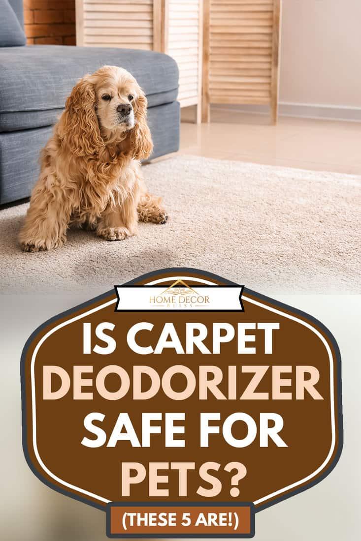 Cute dog near wet spot on carpet, Is Carpet Deodorizer Safe For Pets