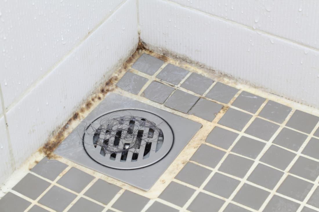 mold in bathroom floor drain