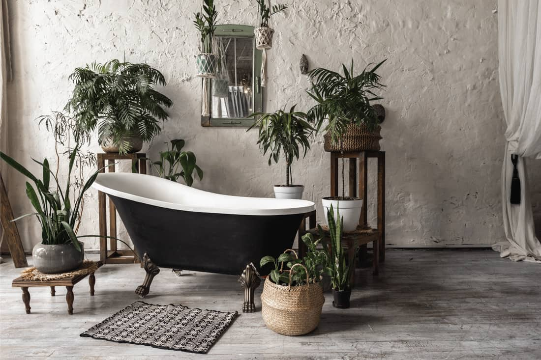 Bathroom in vintage style with elegant interior, contemporary black tub, textile carpet, green plants in flower pots, and bathroom rug