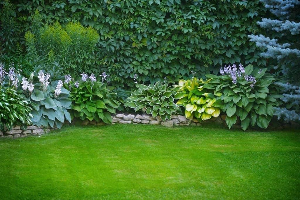 Beautiful garden lawn with green grass