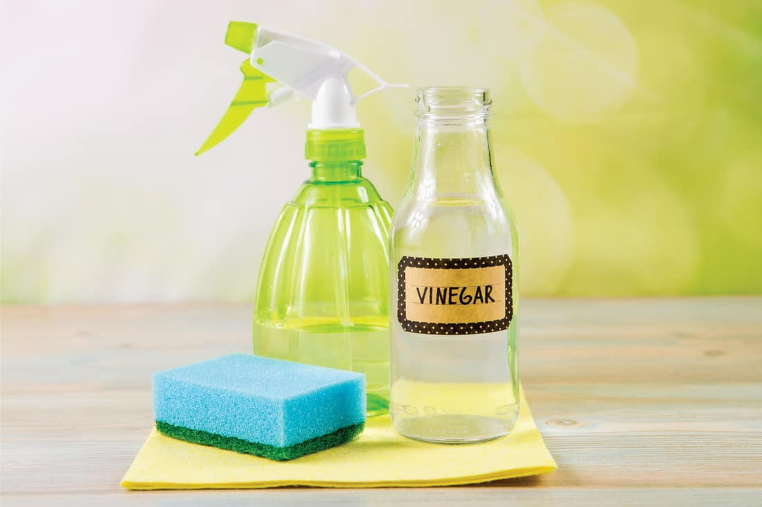 Chemical free home cleaner products on wooden table with green bokeh background