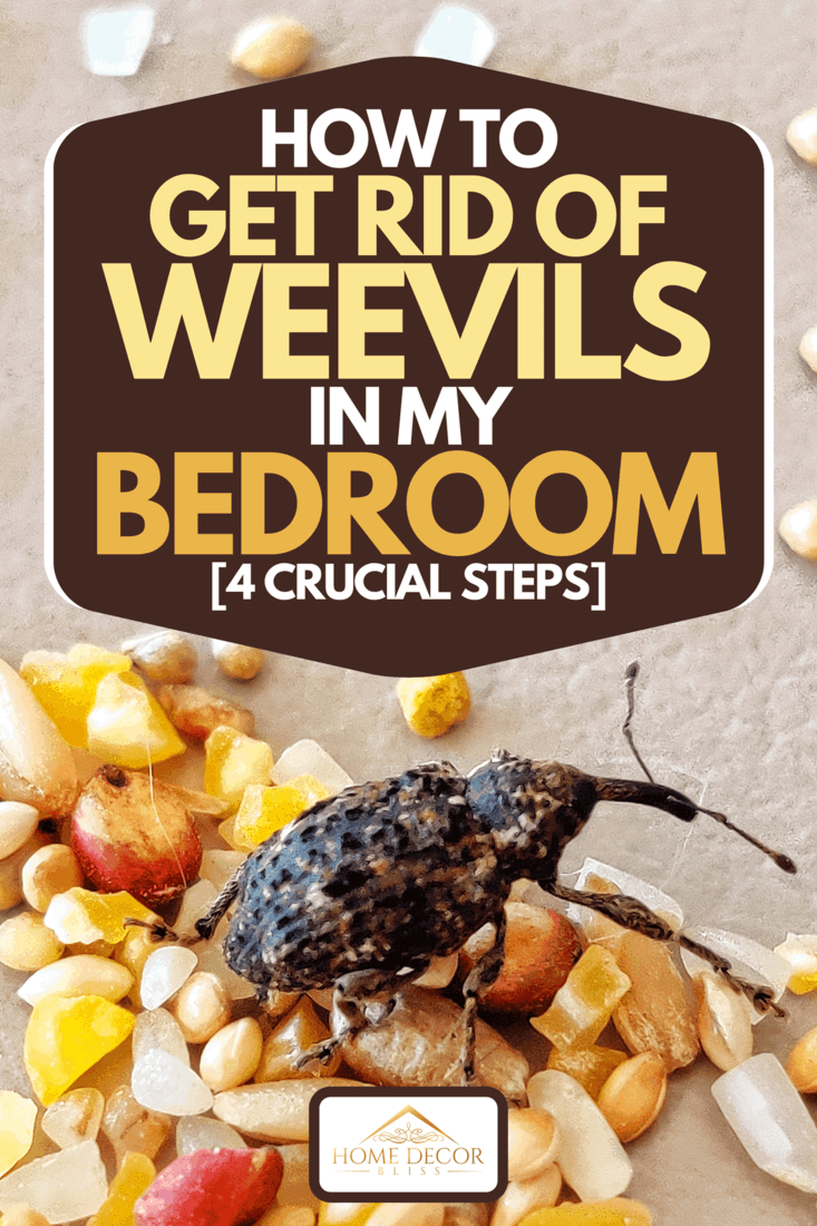 Weevill over seeds and rice, How To Get Rid Of Weevils In My Bedroom [4 Crucial Steps]