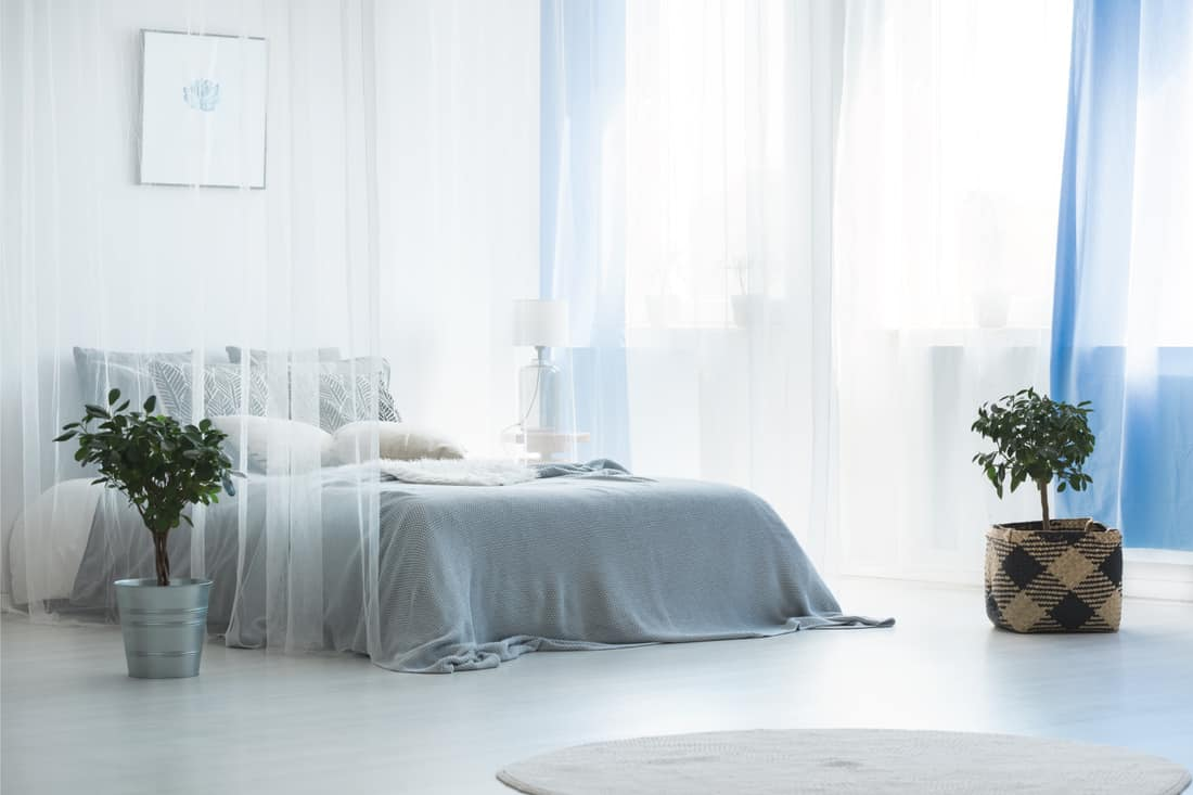 Plant in bucket next to bed covered by flowy canopy in simple white bedroom interior