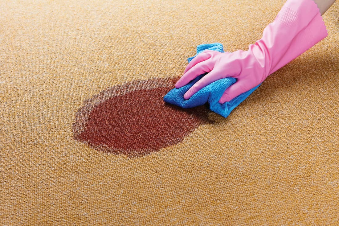 Woman cleaning red stain on brown carpet using blue rag and pink rubber gloves