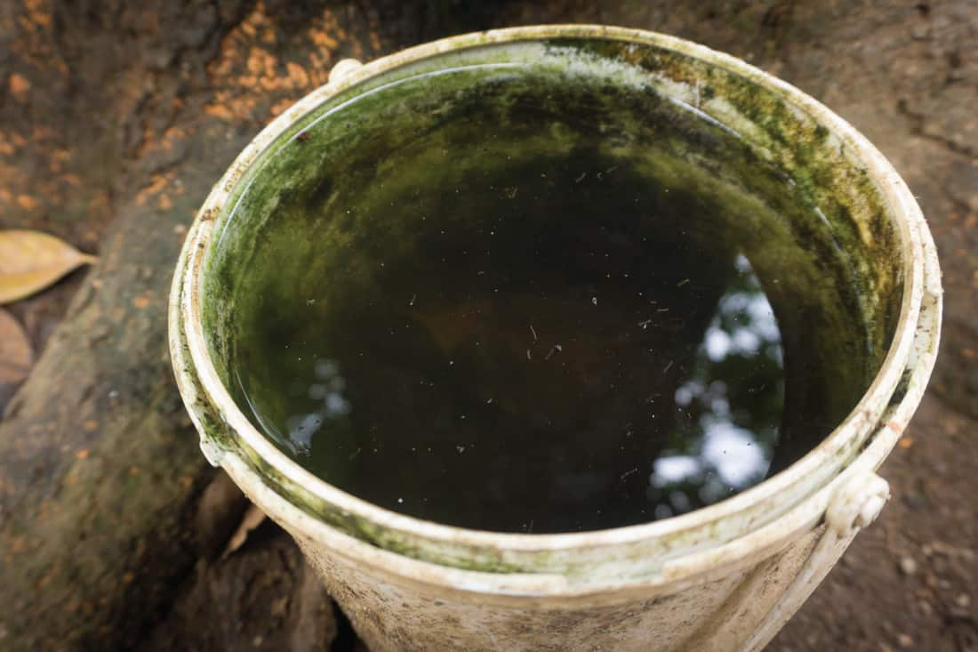 A plastic tub with mosquito nest egg on water that can cause malaria