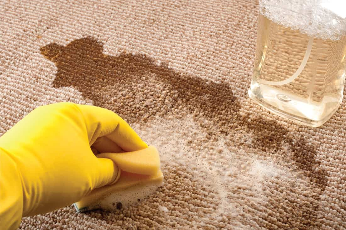 A hand wearing yellow rubber gloves cleaning up a spilled cup of coffee on a carpet with a sponge and a bottle of carpet cleaner