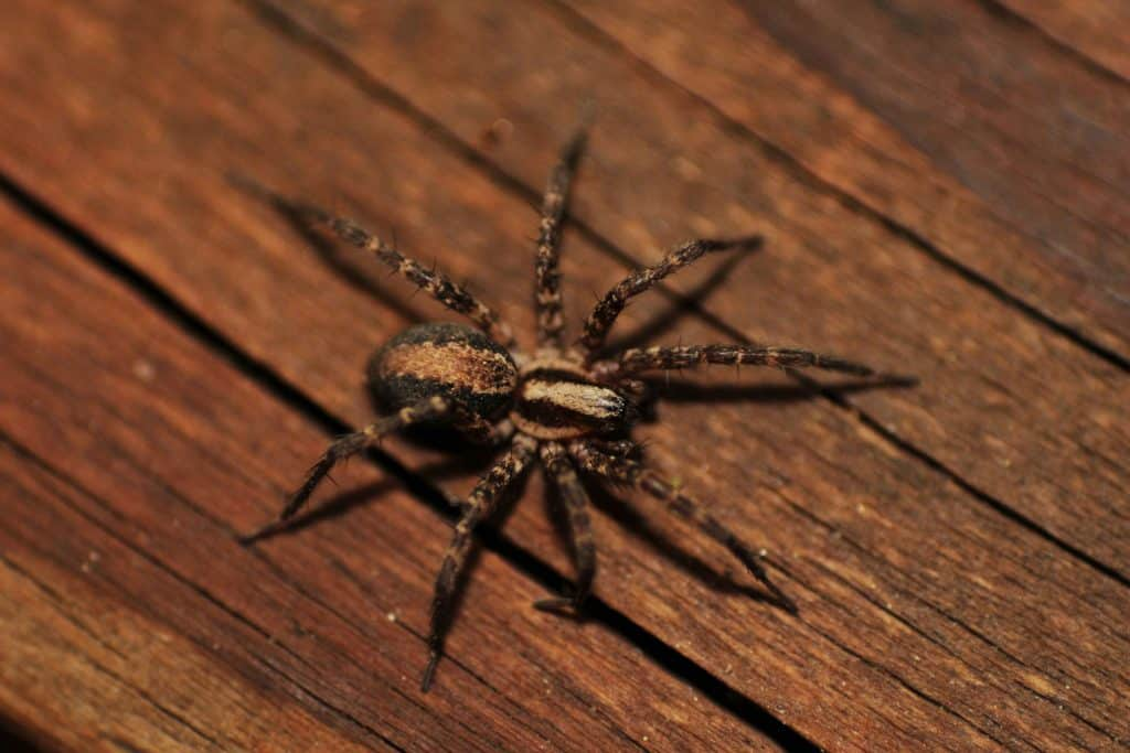 A home spider crawling on the sidings of a house