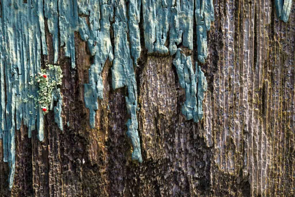 An up close photo of an old rotten wood peeling away due to harsh weather