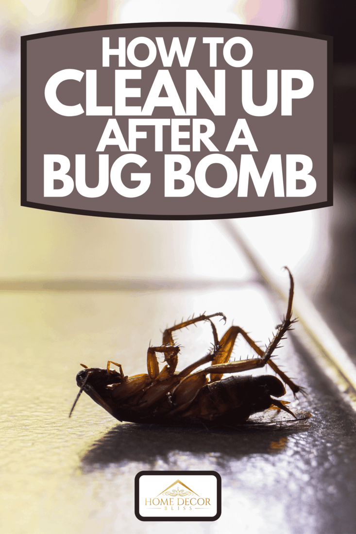 Silhouette of a dead cockroach in the house, How To Clean Up After A Bug Bomb