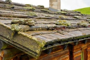Read more about the article How To Remove Moss From Wood Shingles? [3 Steps]