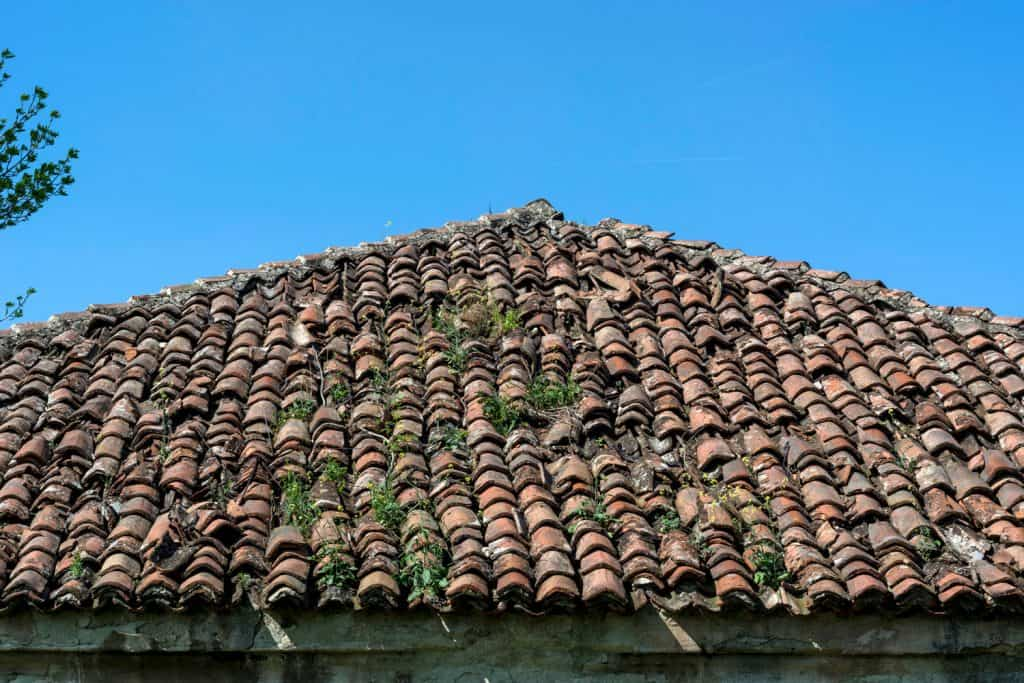 Moss on asphalt shingles of a roof