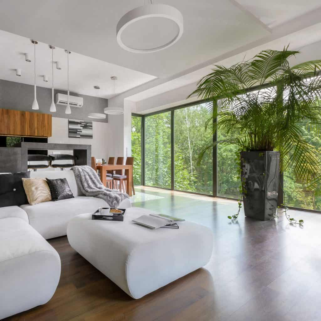 Spacious modern contemporary living room with dark wooden flooring, white sectional sofa and white ottoman, a huge indoor plant next to a huge picture window