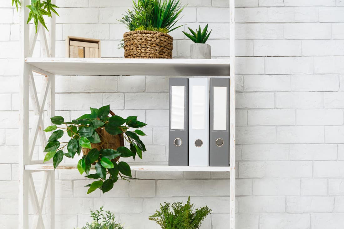 White bookshelf with plants and folders over white wall, empty space