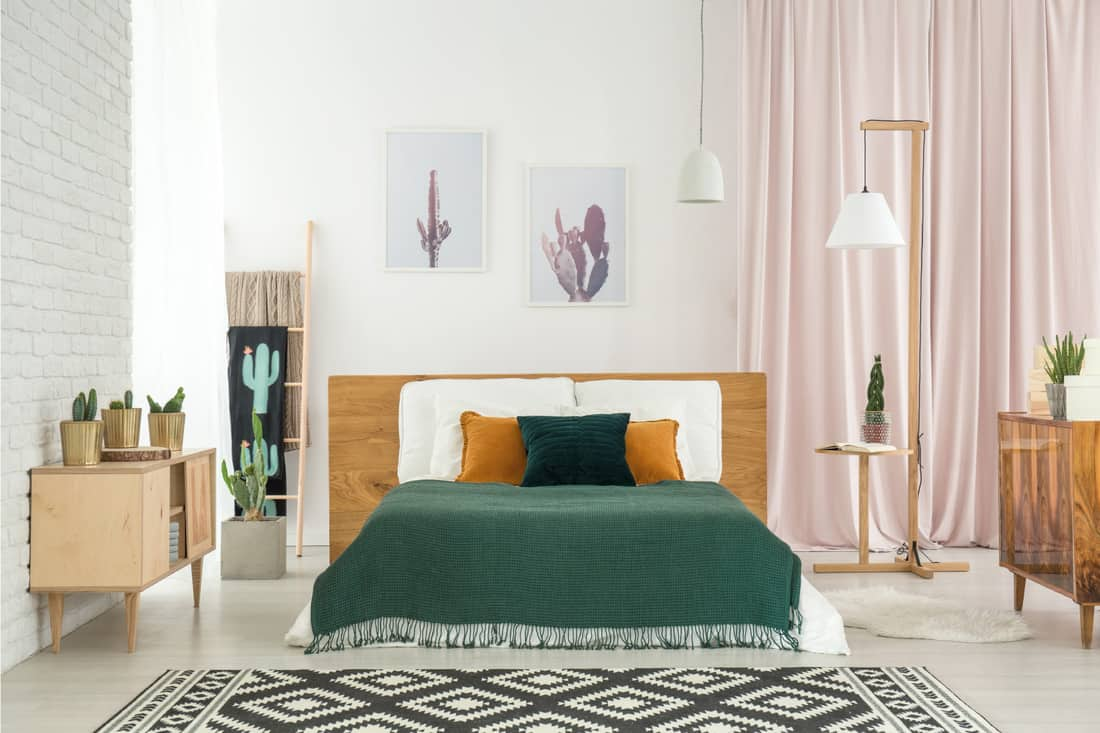 Wild west style bedroom with succulents and cacti on display