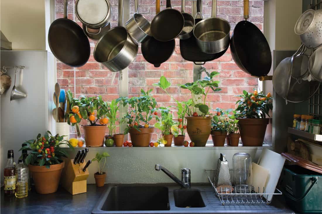 Domestic kitchen with windowsill garden