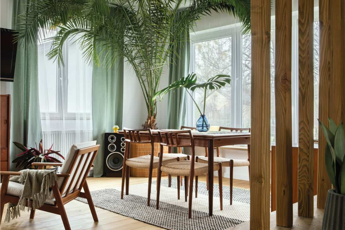 scandinavian living room with retro furniture, tropical plant, window, decoration and elegant personal accessories, texture rich treatments