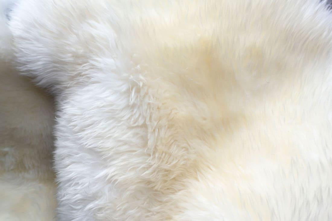 white colored Fluffy Background.Shaggy fur texture. Fur skins for sheepskin skins for interior design