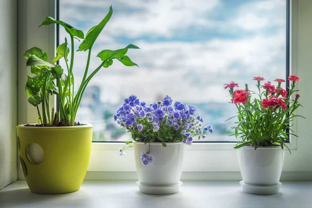Gorgeous indoor plants and flowers planted on yellow and white ceramic