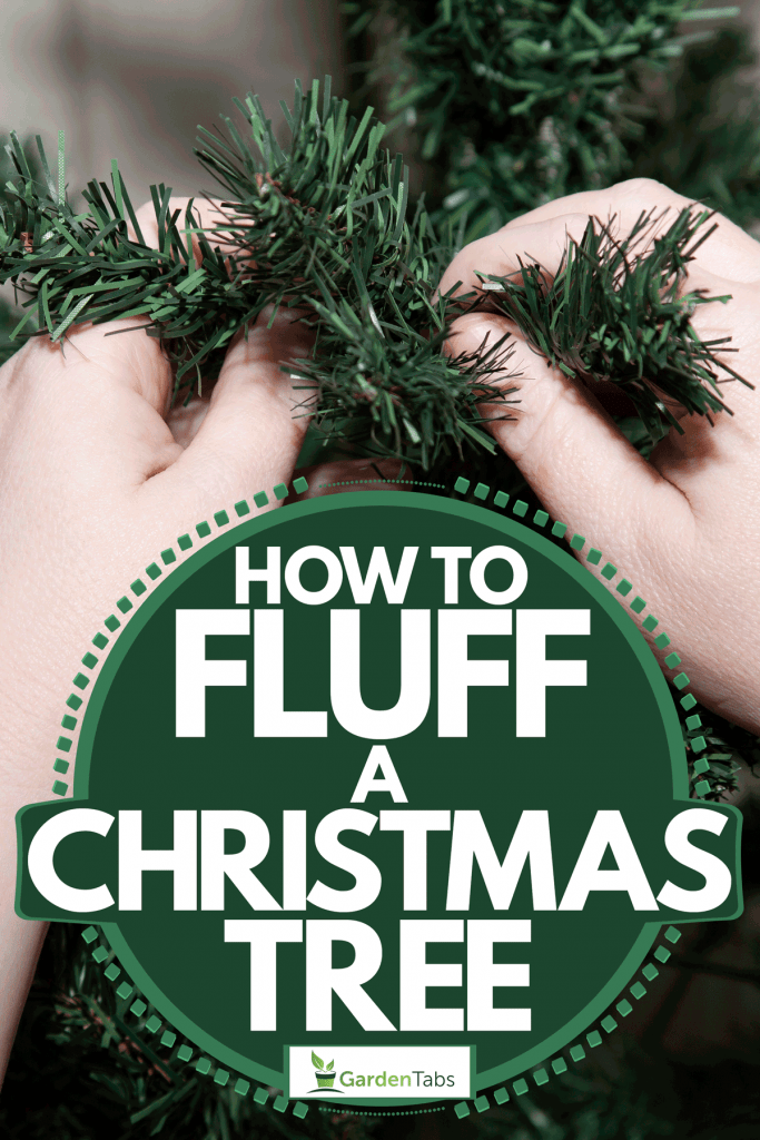 An up close photo of a woman shaping the limbs of her Christmas tree, How To Fluff A Christmas Tree