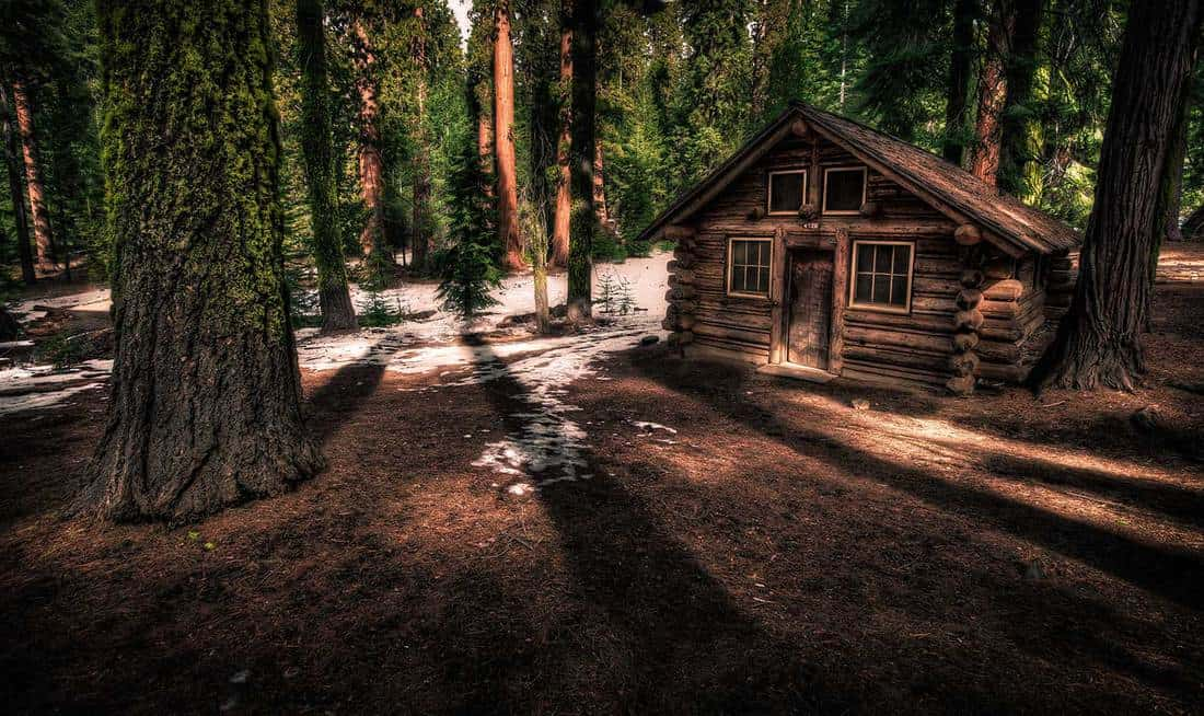 Lone cabin in the forest