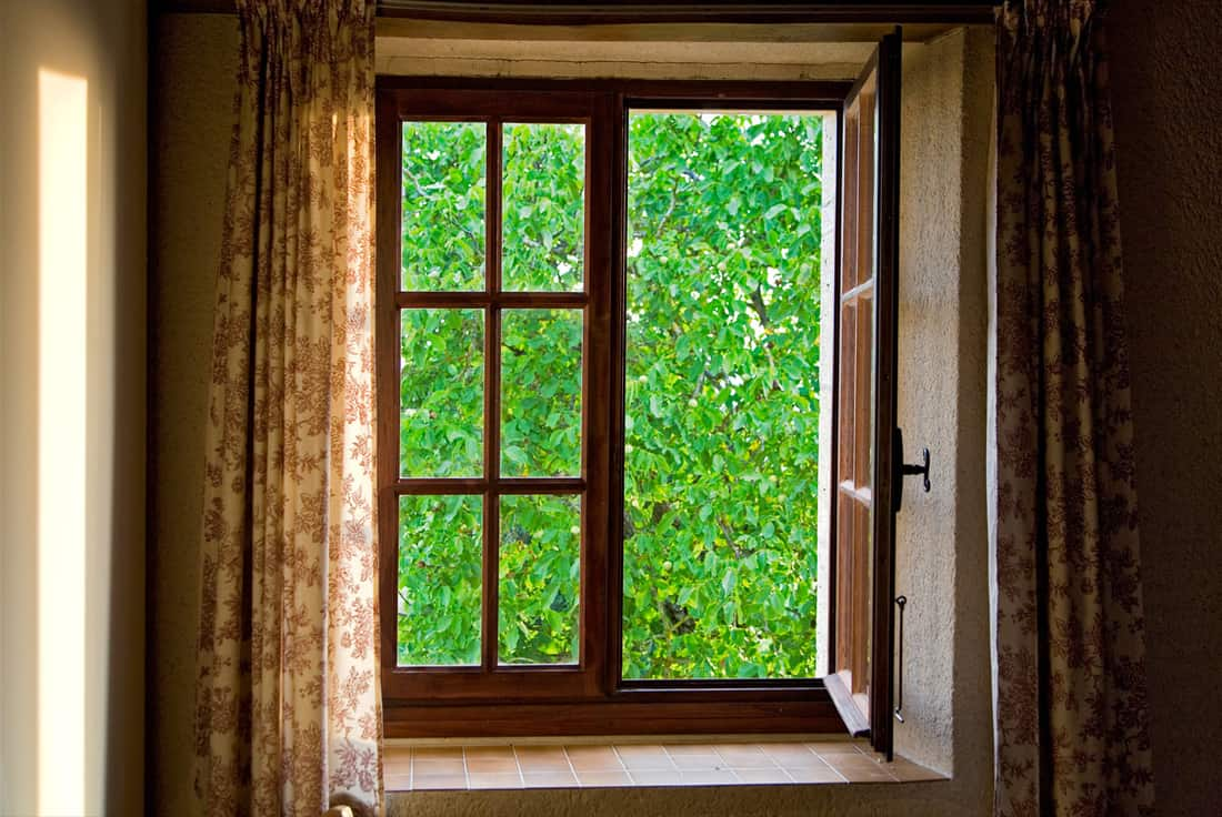 Look through the elegant window at the green tree.